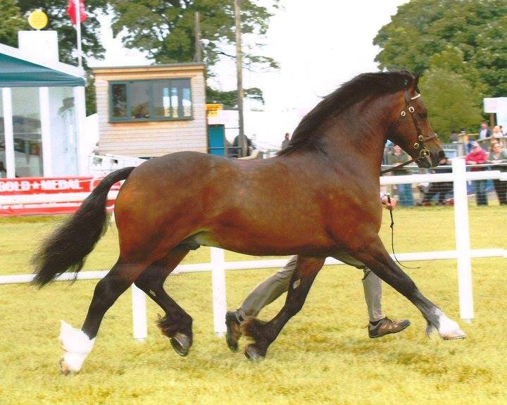 Pennal the Great in-hand
