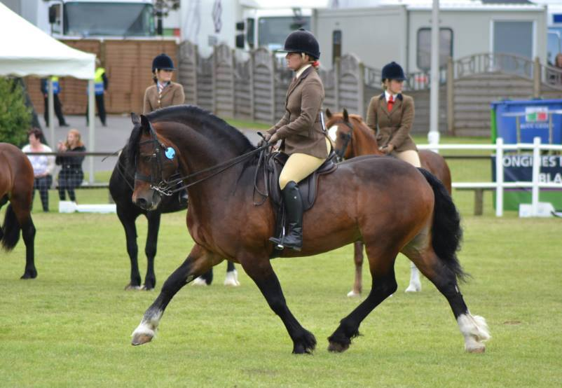 Pennal the Great under saddle